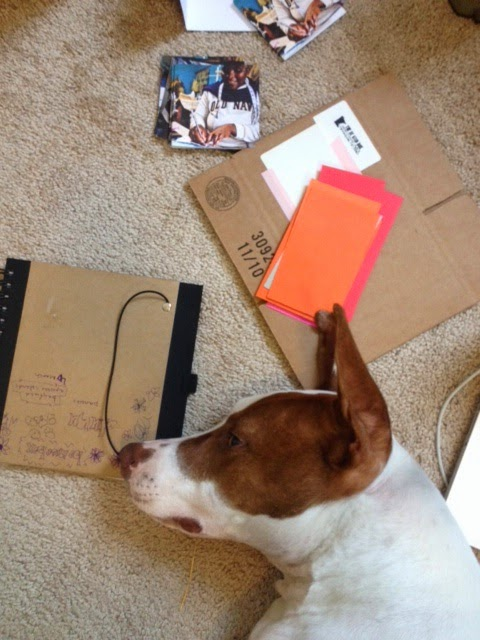 Dog laying on floor with cardboard boxes and colored paper