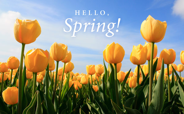 "Image of yellow tulips with heading ""Hello, Spring!"""