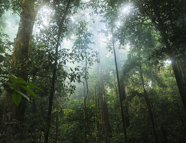 Misty green jungle landscape