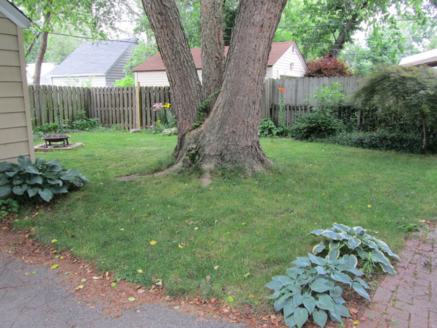 Small back yard with large tree